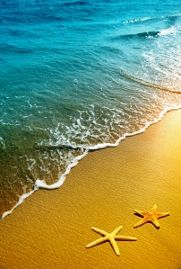 starfish on a beach sand