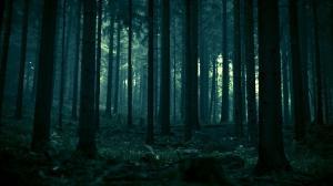 Dark-Forest-19