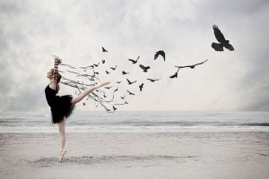 setting-bird-free