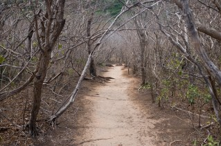 Barren path